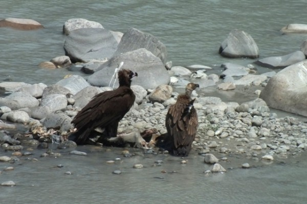 Vulture Tour in Nepal
