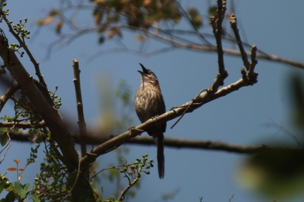 Endemic Bird Hike